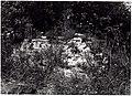 Restanten staakmolen met omgeving - 320488 - onroerenderfgoed.jpg