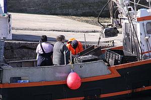 Retour de la pêche à la seiche du fileyeur Jason IV (28).JPG