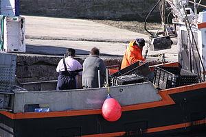Retour de la pêche à la seiche du fileyeur Jason IV (43).JPG