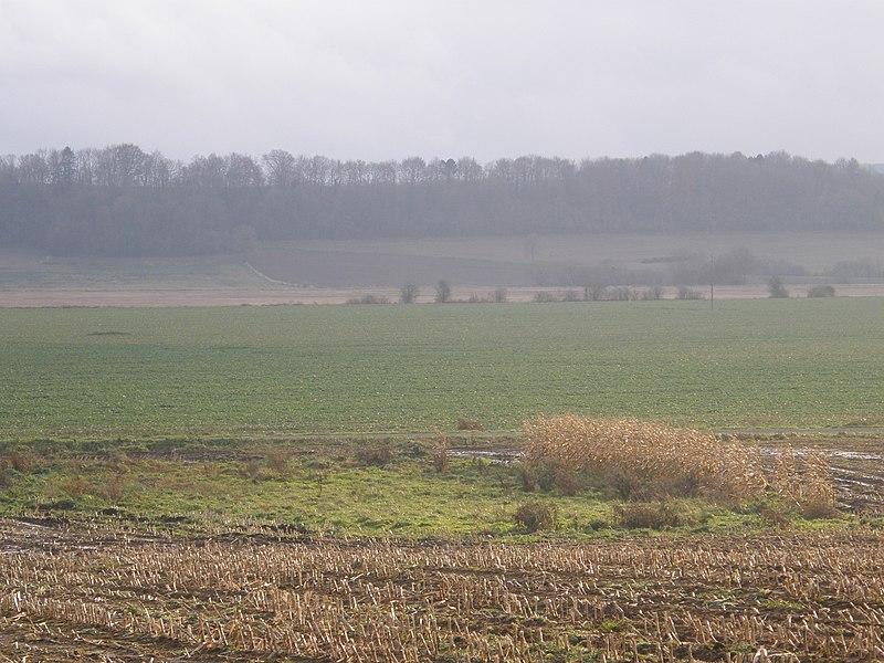 Réville-aux-Bois (Meuse). Zone humide dans un champ de maïs, après le retournement d'une prairie.