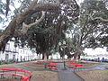 Ribeira Grande (14004586402).jpg
