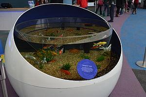 Ripley's Aquarium of Canada - Koi tank at the entrance