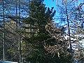 Risoul, Winter 2012 - panoramio (11).jpg