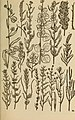 Rocky Mountain flowers - an illustrated guide for plant-lovers and plant-users (1920) (14784586812).jpg