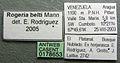 Rogeria belti casent0178653 label 1.jpg