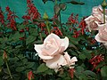 Rose from Lalbagh flower show Aug 2013 8546.JPG