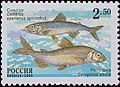 Russia stamp 2000 № 630.jpg
