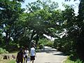 Rutgers Gardens in New Brunswick New Jersey visitors on a walkway Image Number 27.jpg