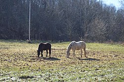 Horses in a pasture east of Caldwell