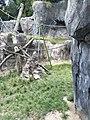 San Diego Zoo 17 2016-06-10.jpg