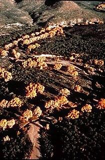 San Pedro River (Arizona) river in the United States of America