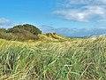 Sand dunes at Sandhead - geograph.org.uk - 1626816.jpg