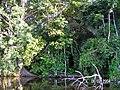 Sandoval , Tambopata - panoramio (6).jpg
