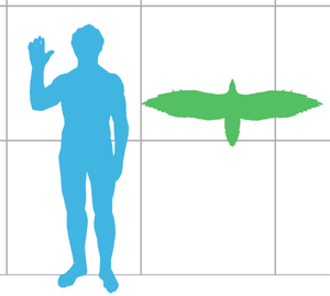 Sapeornis - Size of S. chaoyangensis compared with a human