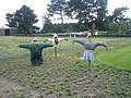 Scarecrows at RHS Wisley - geograph.org.uk - 847192.jpg