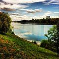 Schwäne auf der alten Donau -vienna (8864400905).jpg