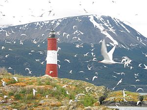 Patagonia - Island - seabirds and lighthouse in foreground with mountain rising in background