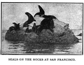 Seals San Francisco (Forty Years On the Pacific).png