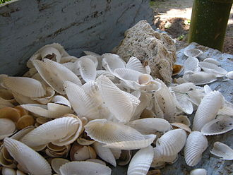 Seashell - A group of seashells