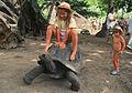 Seychelle Schildkröte.jpg