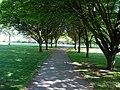 Shady Walk - geograph.org.uk - 1283934.jpg
