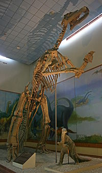 http://upload.wikimedia.org/wikipedia/commons/thumb/4/4a/Shantungosaurus_2008_09_07.jpg/200px-Shantungosaurus_2008_09_07.jpg