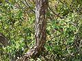 Sherod (Gujarati- શેરોડ) (4304976439).jpg