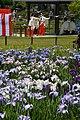Shinto rituals at Suigo Sawara Ayame Park,Katori city,Japan.jpg