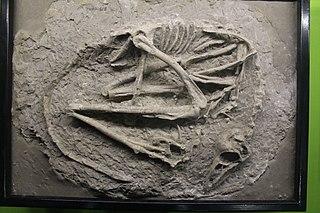 <i>Sinovenator</i> Extinct genus of dinosaurs