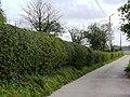 Sint-Pieters-Leeuw Wolfpoortstraat Hoogstamboomgaard met afsluitingshaag (1) - 216559 - onroerenderfgoed.jpg