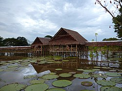 Leticia, Amazonas httpsuploadwikimediaorgwikipediacommonsthu