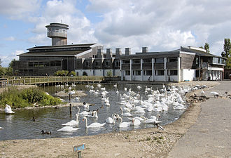 WWT Slimbridge - The main buildings and Sloane Observation Tower in July, the majority of the birds are mute swans