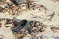 Slippers on the beach of Bantayan 21.jpg
