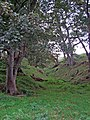 Small wooded valley near Dailly - geograph.org.uk - 335410.jpg