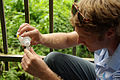 Solomon Water volunteer Louis Downing tests the quality of Honiara's main water supply, close up. (10721599915).jpg