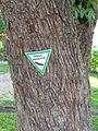 Speierling auf dem Spielplatz (Butzbach) 10.JPG