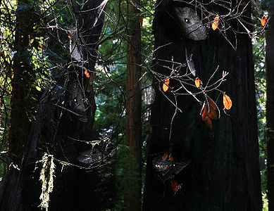Spider webs in Muir Woods