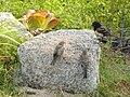 Spotted Towhee (9203476057).jpg