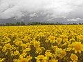 Spring wildflowers (5648499548).jpg
