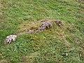 Spur der Wüstung auf dem Gipfel des Wolfsbergs (Adelegg). 2.JPG