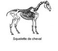 Squelette de cheval.png