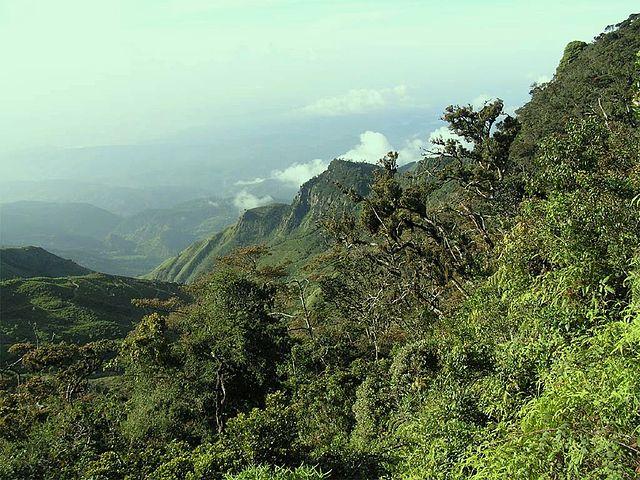 Tropický prales