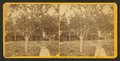 St. Johns River, Florida, from Robert N. Dennis collection of stereoscopic views 2.png