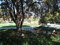 Stanford University March 2012 60.jpg