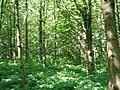 Stanmer Woods - geograph.org.uk - 1329703.jpg