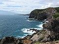 Starr-050404-5379-Digitaria insularis-view Kaemi-Mokeehia-Maui (24373971809).jpg