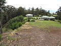 Starr-120426-5233-Musa x paradisiaca-Pome Hawaiian Tall Apple patch-Hawea Pl Olinda-Maui (25047225501).jpg