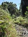 Starr-170304-7169-Rubus niveus-in gully-Boundary Trail Polipoli-Maui (33000176660).jpg