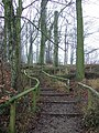 Steps in Lady Spencer's Wood - geograph.org.uk - 651973.jpg