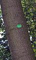 Sternwartepark Baum 344.jpg